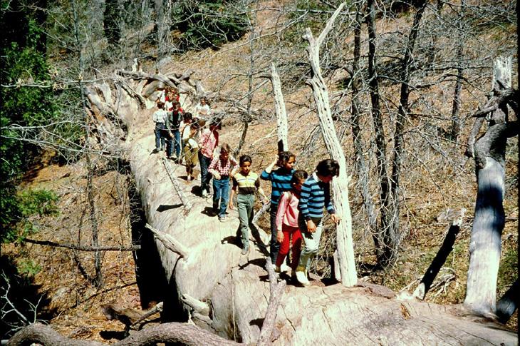 San Bernardino Mountains Land Trust :: The Story of The Ridge